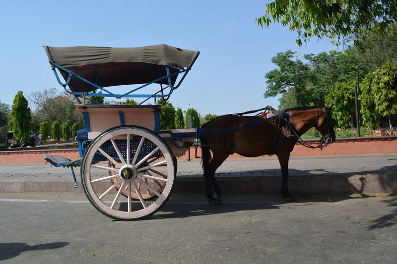 Animals Car EyeEm Best Shots Horse Cart Horse Life Old Way Of Transportation One Animal Taking Photos Transportations Way Of Transport Showing Imperfection