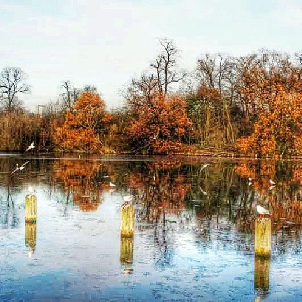 La Calma del Frio Invierno . Recuerdo de mi Visite a Londres