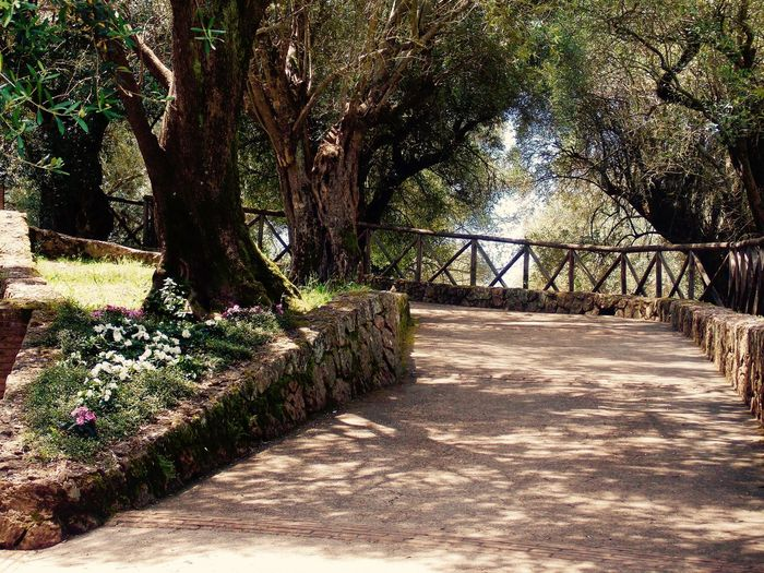 Villa Hadriana Beauty In Nature Day Footpath Growth Light And Shadows Nature No People Olive Trees Outdoors Scenics Summer Sunlight The Way Forward Tranquility Tree Walkway