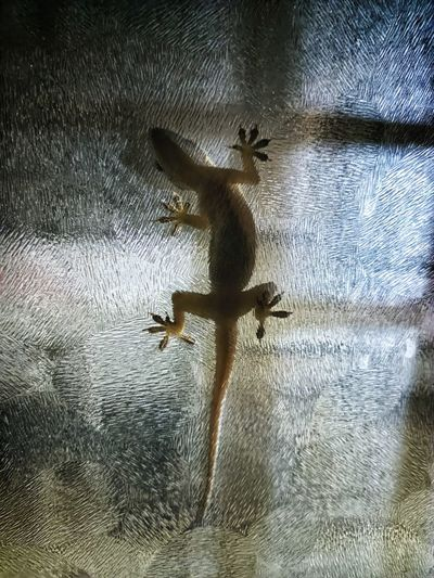 High angle view of lizard on glass window
