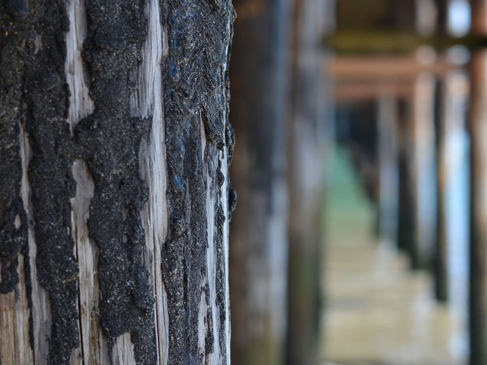 Close-up Day Focus On Foreground Nature No People Old Wood Outdoors Pier Sea Text Tree Tree Trunk Wooden Construction Wooden Beam Wooden Post Beam