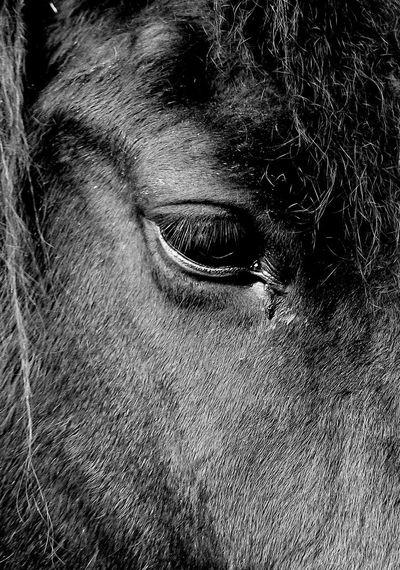 Man sieht nur mit dem Herzen gut, das wesentliche ist für das Auge unsichtbar Horse Blackwhitephotography First Eyeem Photo