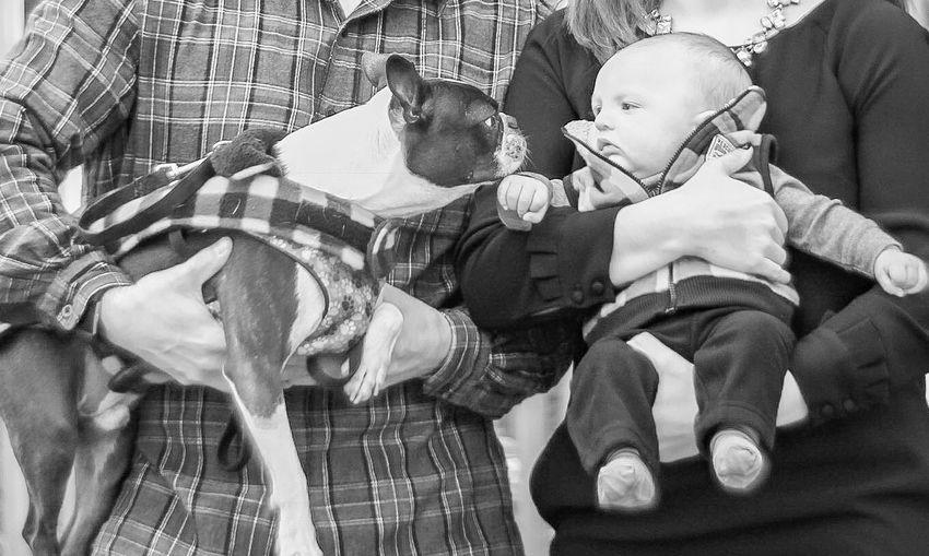 Baby One Animal Pets Bonding Dog Cute Domestic Animals