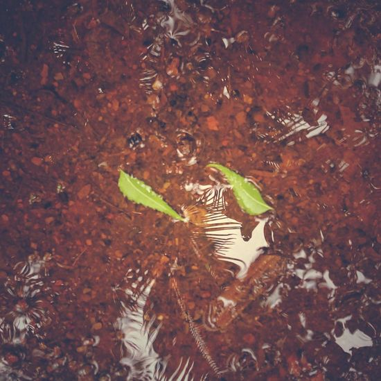 Rainy Days Leaves🌿 Nature_collection Outsider Art Leaves In Water Leaves Green Vacation