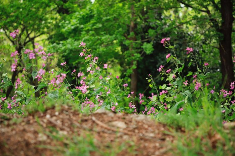 Plant Flower Flowering Plant Beauty In Nature Growth Freshness Fragility Vulnerability  Selective Focus Green Color Nature Land Day Field No People Outdoors