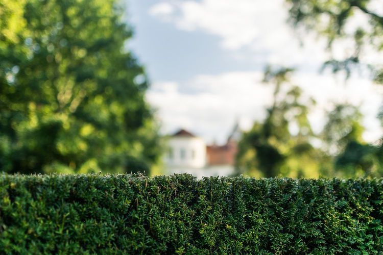 Plant Growth Green Color Tree Nature Day No People Beauty In Nature Focus On Foreground Selective Focus Architecture Outdoors Leaf Built Structure Plant Part Building Exterior Close-up Sunlight Sky Tranquility Hedge Skyscraper Sky And Clouds Skyporn Sky_collection Sun Sunset Sunlight Sunrise Sunset_collection Berlin Berliner Ansichten Berlin Photography Berlin Mitte Berlin Love Sony Sonyphotography Sonyalpha