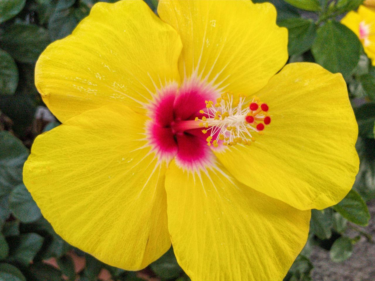 flowering plant, flower, flower head, freshness, yellow, petal, beauty in nature, plant, inflorescence, fragility, vulnerability, growth, close-up, pollen, nature, day, stamen, no people, focus on foreground, outdoors