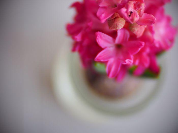Pink Hyacinth Flower Flowers Toylens