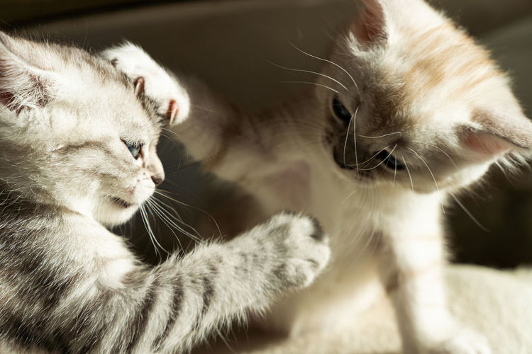 Close-up of kittens playing