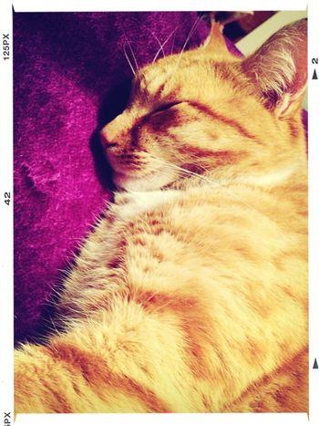 """ sleep tight my angel"" Taking Photos Cat"