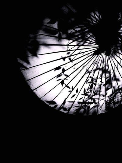 No People Indoors  Close-up Sky Day 百華百彩 Umbrella 😚 Yamaga Kumamoto