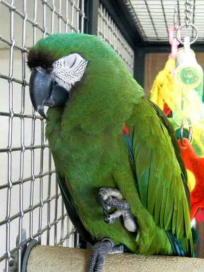 Parrot Animals