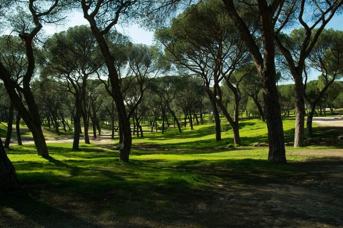 Dehesa de la Villa park, Madrid, Spain Tree Nature Green Color Growth No People Grass Beauty In Nature Tranquility Outdoors Landscape Sky Day Medditerenean Park Madrid Spain