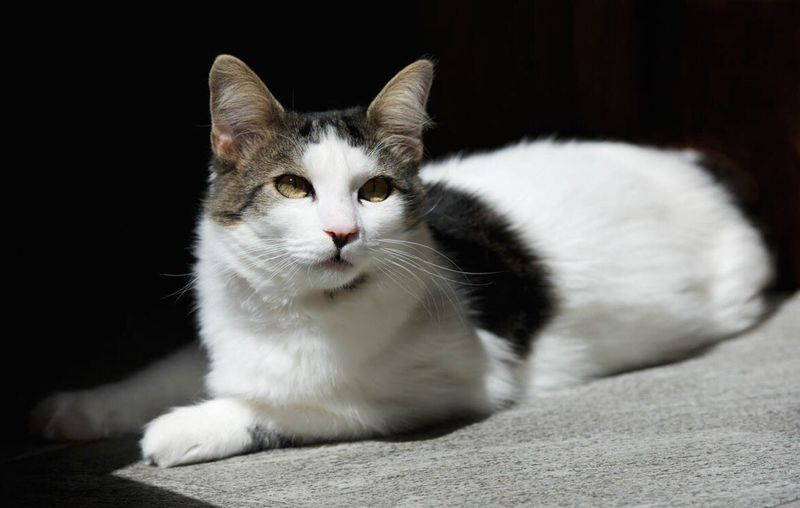 Cat Cat Lovers Cats Cats Of EyeEm Gatti Gatto Pets Pet Animals Animalphotography Animal Themes Light And Shadow Contrast