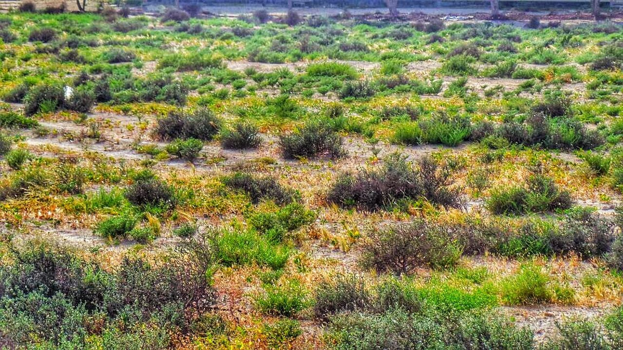 plant, growth, nature, no people, landscape, tranquility, tranquil scene, day, beauty in nature, field, outdoors, scenics, tree, grass, arid climate, desert, wilderness area