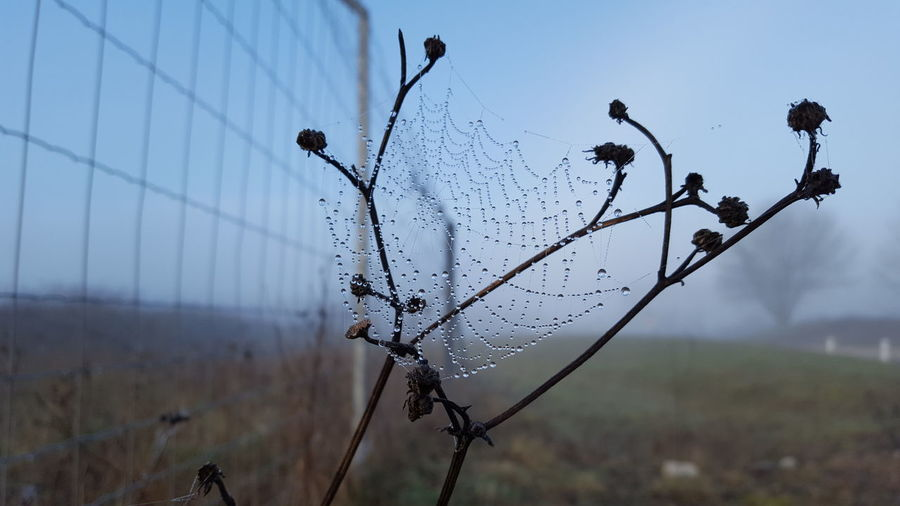 Close-up of wet spider web on plant against sky