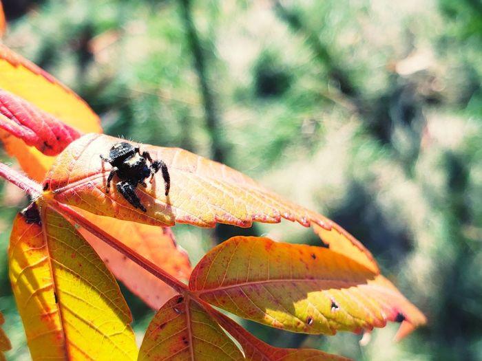 Leaf Perching