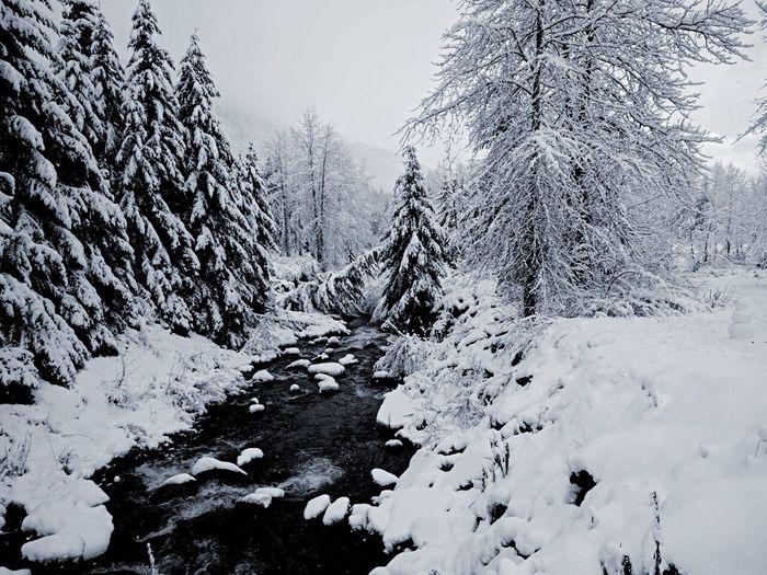 Bir anlığına orada olan o muhteşem manzara ve onun senin keşfetmeni bekleyişi... Nedense, kar bana her zaman masumiyeti anımsatmıştır. Sanki kar daha bir masumdur herkesten, her şeyden... / The spectacular scenery which is there only for a moment and its waiting for you to catcht it. Snow has always reminded me of innocence. It feels like snow is more innocent than anything else... Snow ❄ Snow Beauty In Nature Beautiful Shouldntmiss Shouldntbemissed IGOT7🐥 Loveit♥ Gorgeous View Amateurphotographer