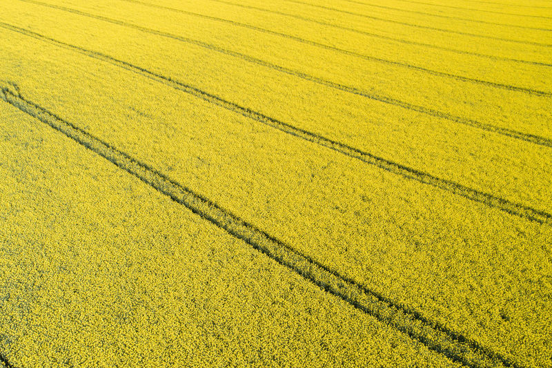 Plant Agriculture Field Land Rural Scene Growth No People Yellow Landscape Day Nature Backgrounds Environment Farm Beauty In Nature Scenics - Nature Tranquility Outdoors Rapeseed Rapeseed Field RapeFlowers Rapeseed Blossom Rapeseed Flowers