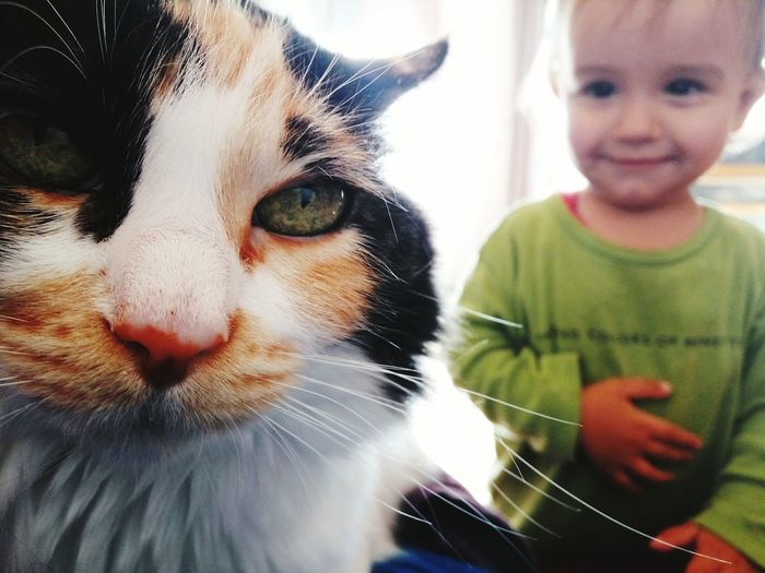 Pets Domestic Animals Child Animal One Animal Domestic Cat Animal Themes Cute People Happiness Mammal Dog Smiling Indoors  Learning Childhood Girls One Person Children Only Portrait