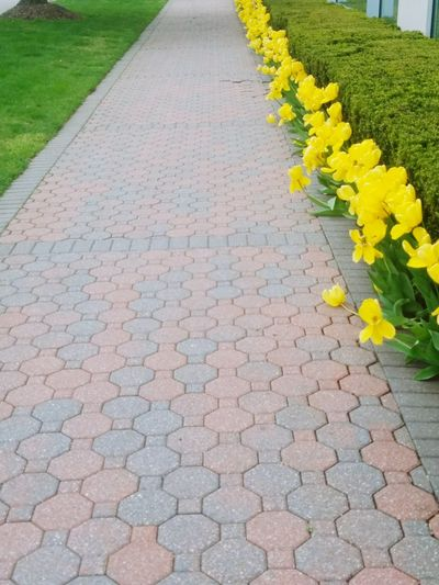 Flower Footpath Yellow Outdoors Street No People The Way Forward Day Plant Growth Sidewalk Nature Road Fragility Beauty In Nature Flower Head