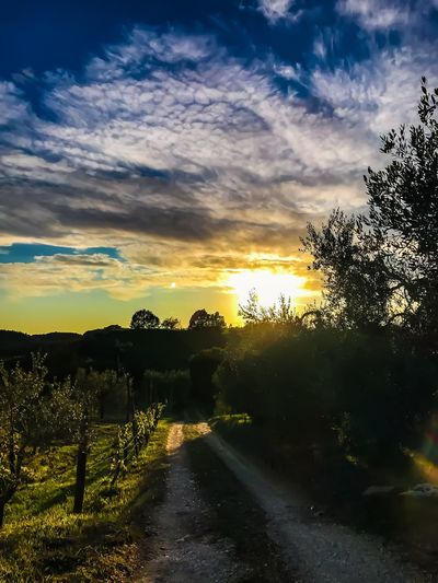 Sunset Italy Dirt Road