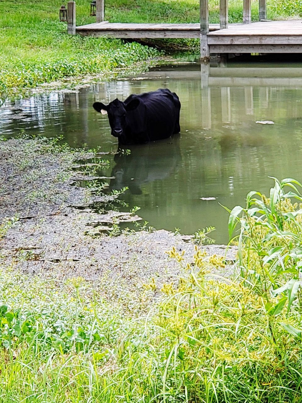 VIEW OF A HORSE IN WATER