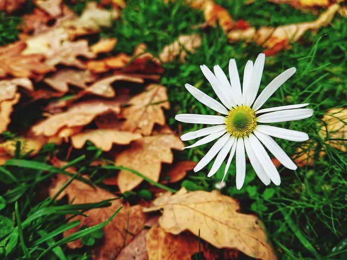 Flower Head Flower Leaf Petal Close-up Plant Green Color Pollen Cosmos Flower