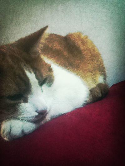 Cat Swaggercat Followback Follow4follow Like4like F4f L4l Followme  Likebacker