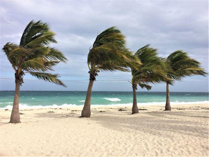 Beach Islas
