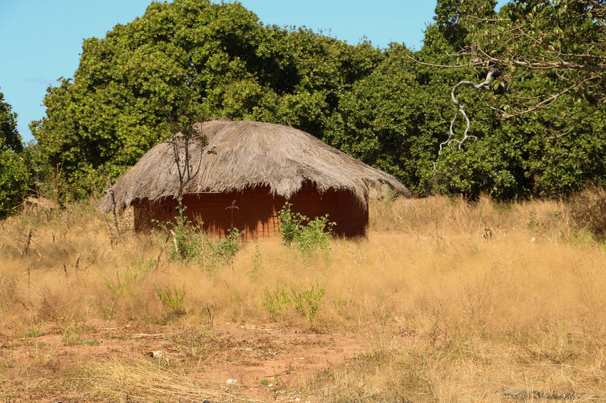 A mud hut in a village in rural Tanzania Agriculture Beauty In Nature Day Growth Mud Hut Nature No People Outdoors Plant Rural Scene Sky Thatched Roof Tree