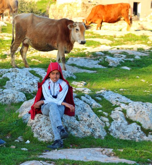 Boy looking away while sitting on rock against cows on grass