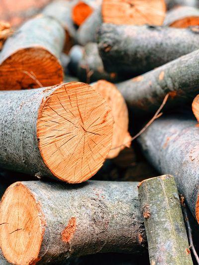 Close-up Wood -