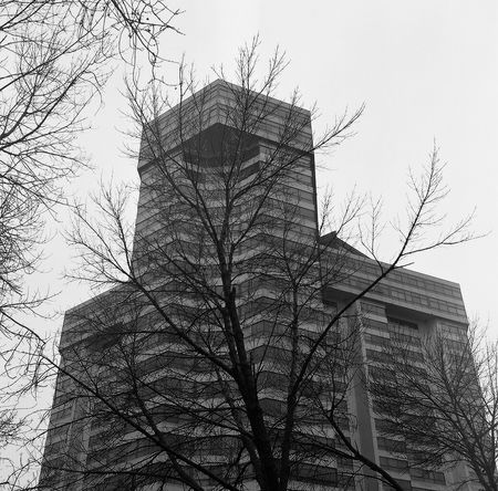 Architecture Bare Tree Building Building Exterior Canada City Day Low Angle View Modern Ominous Ontario Outdoors Toronto Tower Tree