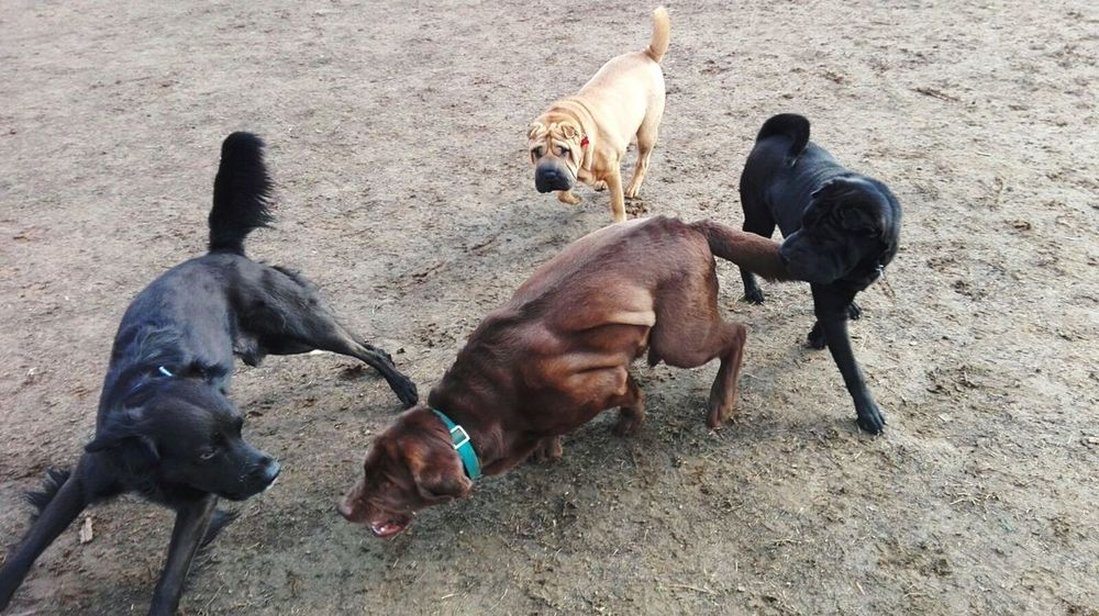 Domestic Animals Animal Themes Sand Mammal High Angle View Outdoors Livestock