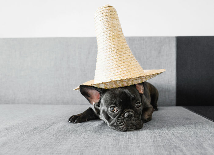 Portrait of dog with hat sitting on sofa