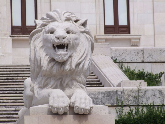 Close-up Of A Lion Statue Against The Wall
