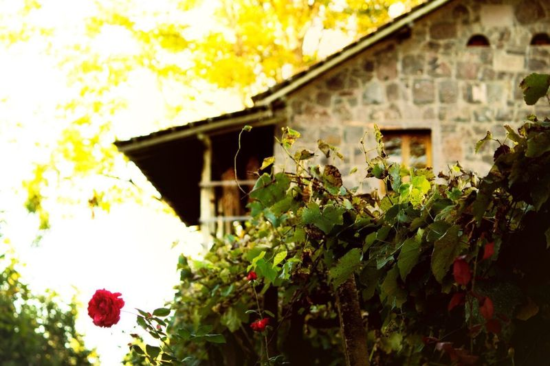 Winery View Travel Destinations Outdoors Built Structure Architecture Building Exterior Plant Flower House Growth Green Color Leaf No People Nature Yellow Day Freshness Beauty In Nature Tree Close-up Window Box Vinícola Brasil Riograndedosul Winery