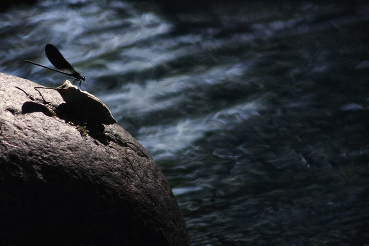 Close-up of bird perching on rock in water