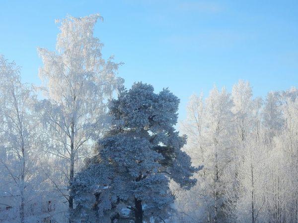 Got to love winter Winter Trees Winter Sun
