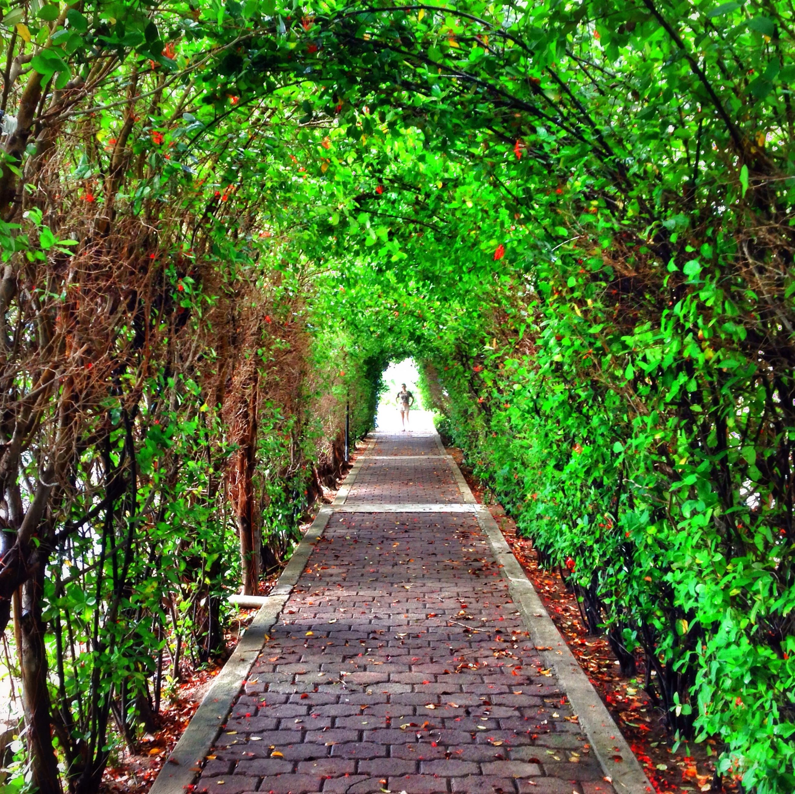 the way forward, tree, diminishing perspective, growth, footpath, green color, vanishing point, walkway, pathway, plant, nature, lush foliage, tranquility, park - man made space, narrow, rear view, day, branch, outdoors, beauty in nature
