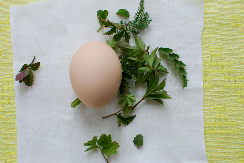Close-up Day Egg Food Food And Drink Fragility Freshness Healthy Eating Indoors  Leaf Nature No People Plant Preparing For Easter Table