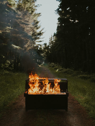 Fire in piano against trees in forest