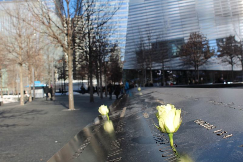 A Moment Of Silence Remember 9/11 Memorial Flower Nature Outdoors Tree Day Fragility Beauty In Nature