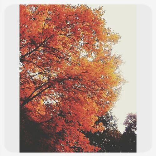 Autumn Autumn Colors Vscocam VSCO