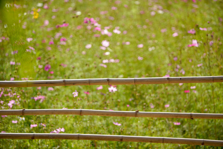 Flower garden Plant Flower Flowering Plant Nature No People Outdoors Day Land Focus On Foreground Freshness Growth Beauty In Nature Environment Green Color Rural Scene Fence Landscape Tree Barrier Selective Focus Garden Backgrounds Textured  Bamboo Green