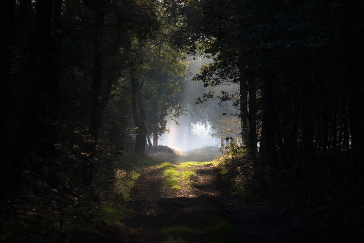 Forest Path Magical Magical Trees Beauty In Nature Dark Forest Path Forest Forest Pathway Landscape Magical Light Magical Moments Nature Sunlight Tree