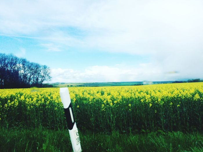 Rain , Snow and Sunshine in April Countryside Flower Field