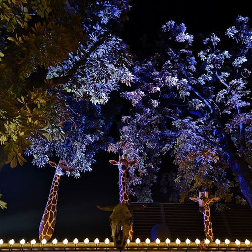 Low angle view of illuminated flowering tree