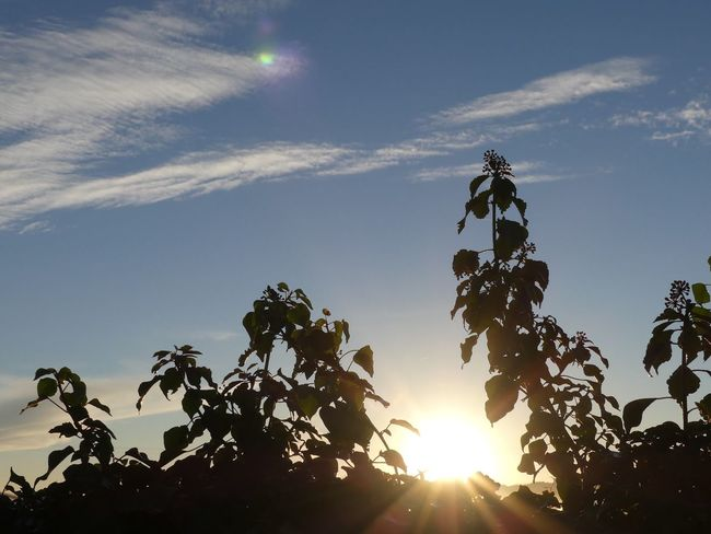 Nature Sky Beauty In Nature Sun Sunrise Lever De Soleil Soleil Ciel CIELFIE Skyfie Ombres Et Lumières